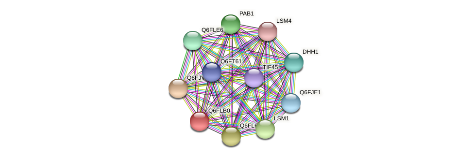 XP_448984.1 protein (Candida glabrata) - STRING interaction network