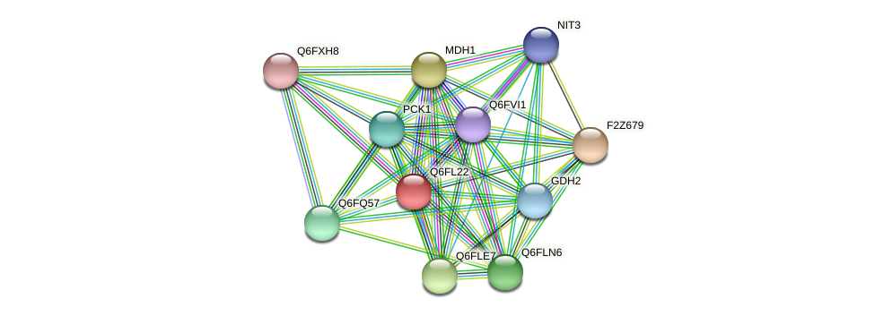 XP_449072.1 protein (Candida glabrata) - STRING interaction network