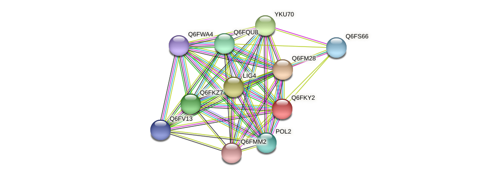 XP_449112.1 protein (Candida glabrata) - STRING interaction network
