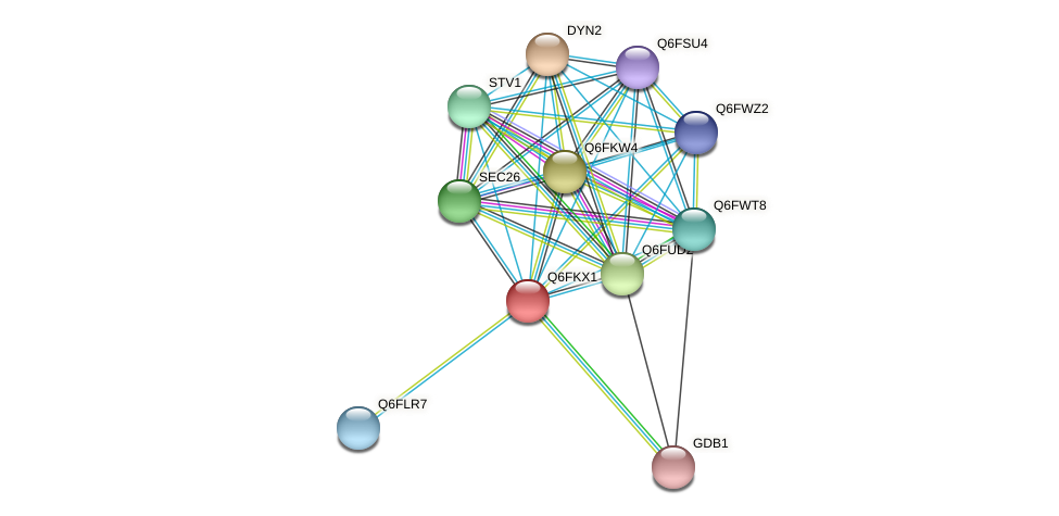 XP_449123.1 protein (Candida glabrata) - STRING interaction network
