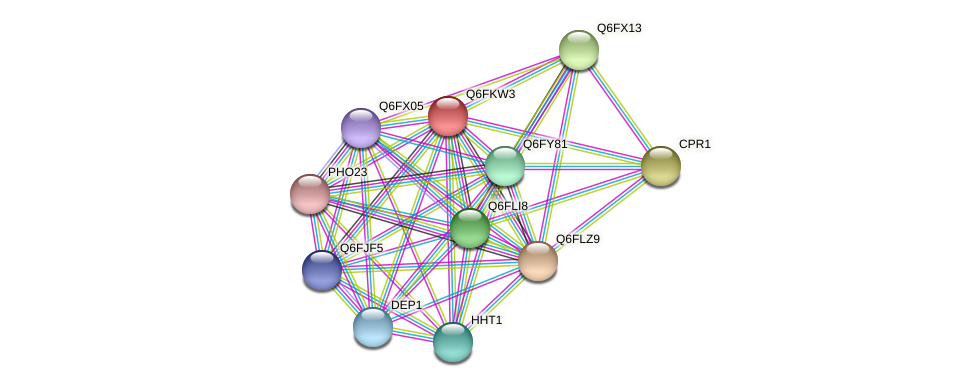 XP_449131.1 protein (Candida glabrata) - STRING interaction network