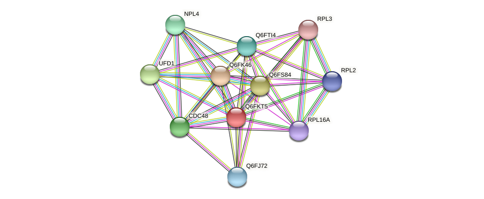 XP_449159.1 protein (Candida glabrata) - STRING interaction network