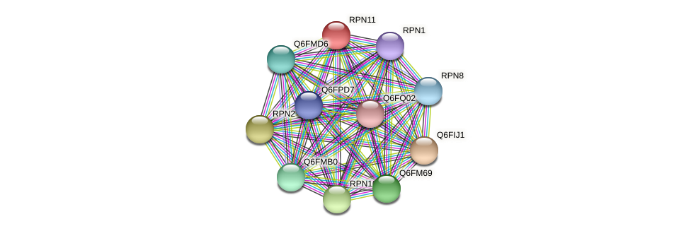 RPN11 protein (Candida glabrata) - STRING interaction network