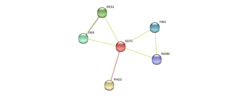 XP_449183.1 protein (Candida glabrata) - STRING interaction network