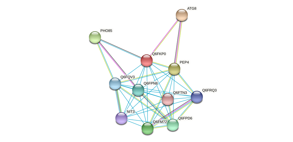 XP_449204.1 protein (Candida glabrata) - STRING interaction network