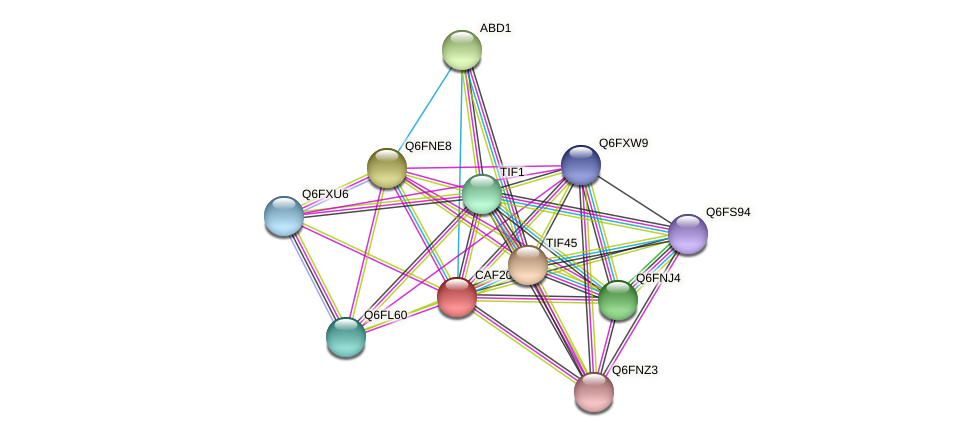 CAF20 protein (Candida glabrata) - STRING interaction network