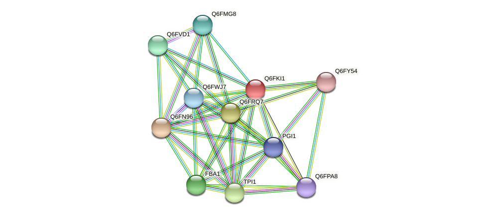 XP_449263.1 protein (Candida glabrata) - STRING interaction network