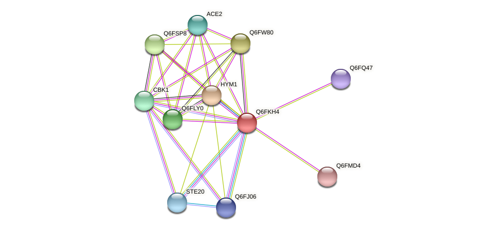 XP_449270.1 protein (Candida glabrata) - STRING interaction network