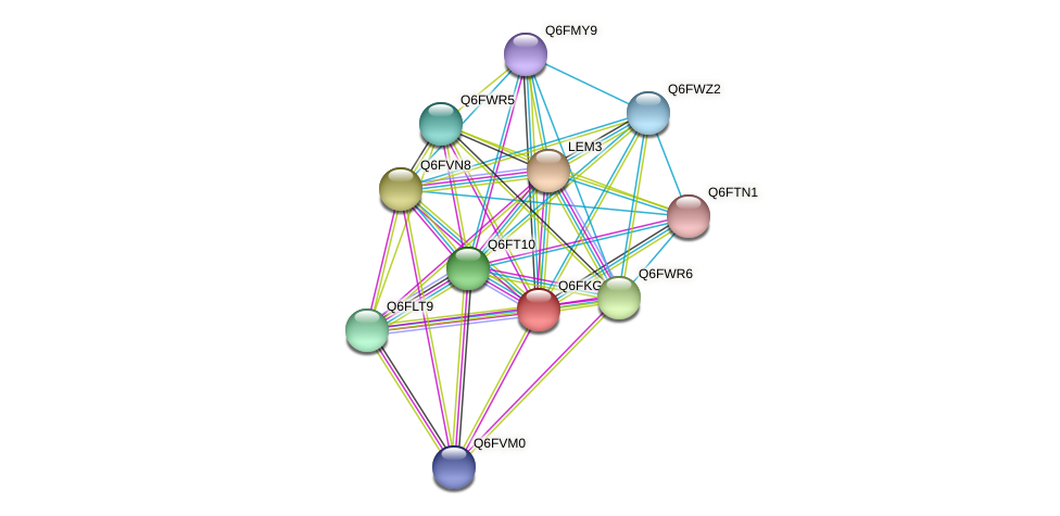 XP_449281.1 protein (Candida glabrata) - STRING interaction network