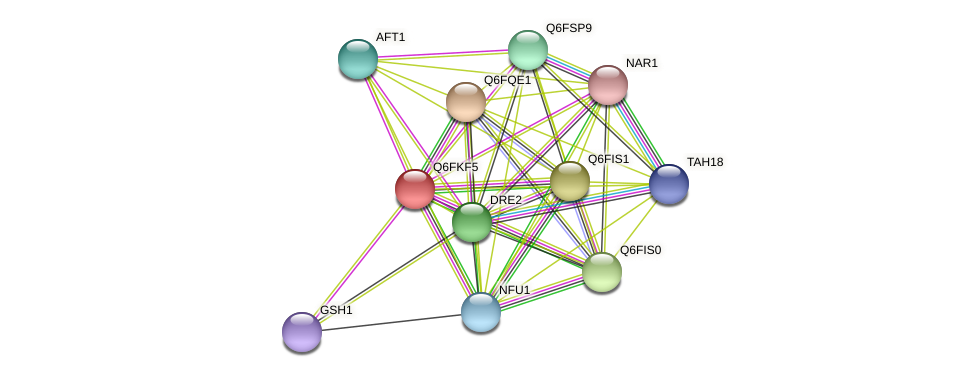 XP_449289.1 protein (Candida glabrata) - STRING interaction network