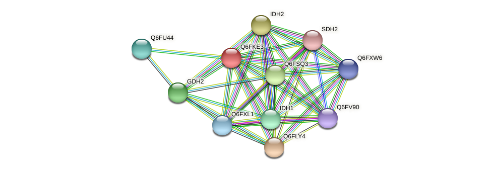 XP_449301.1 protein (Candida glabrata) - STRING interaction network
