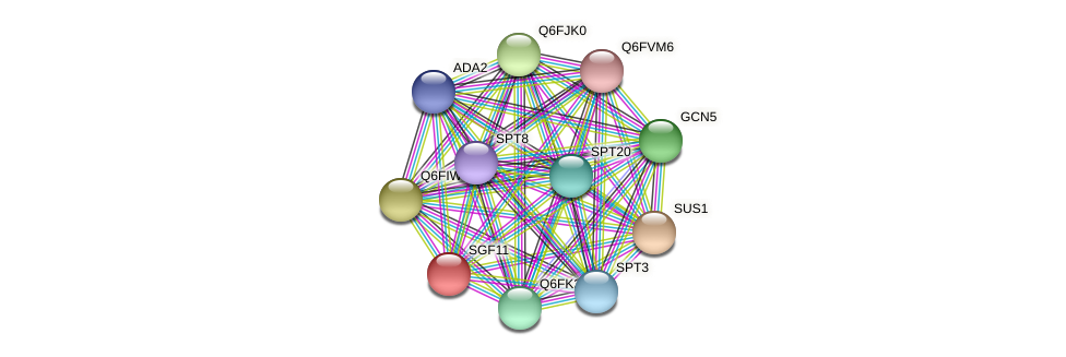 SGF11 protein (Candida glabrata) - STRING interaction network