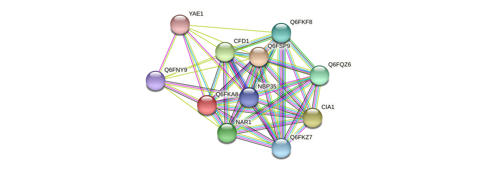 XP_449336.1 protein (Candida glabrata) - STRING interaction network