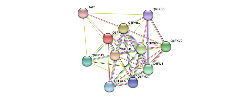 XP_449425.1 protein (Candida glabrata) - STRING interaction network