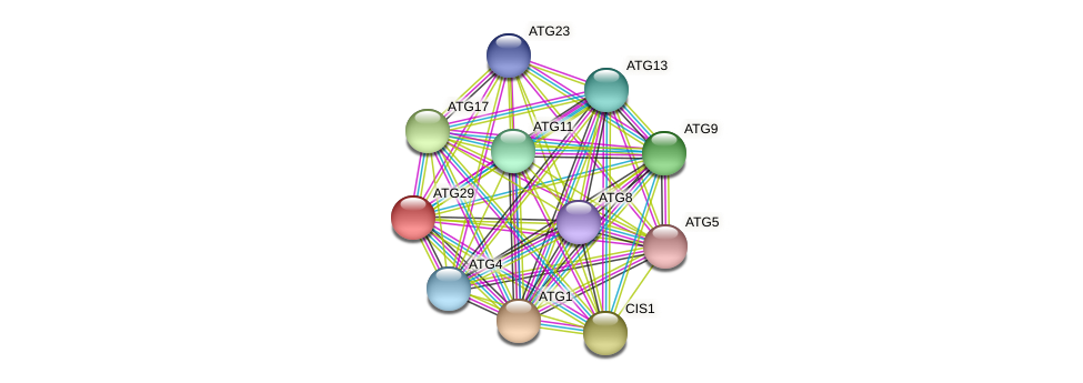 ATG29 protein (Candida glabrata) - STRING interaction network
