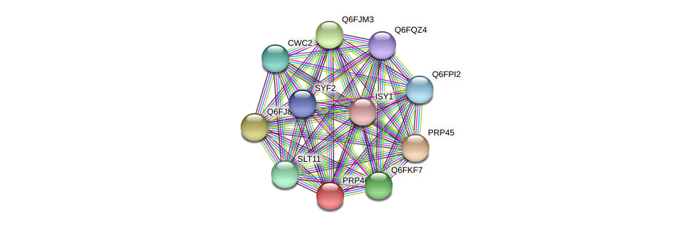PRP46 protein (Candida glabrata) - STRING interaction network