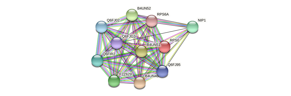 RPS0 protein (Candida glabrata) - STRING interaction network