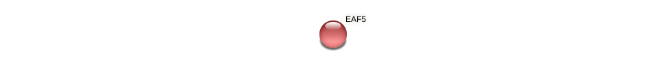 EAF5 protein (Candida glabrata) - STRING interaction network
