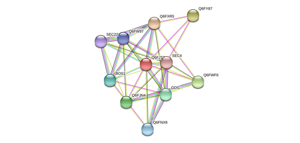 XP_449512.1 protein (Candida glabrata) - STRING interaction network