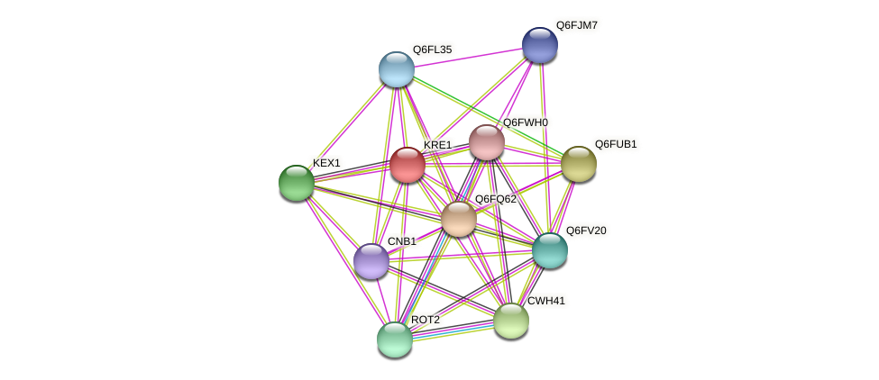 XP_449528.1 protein (Candida glabrata) - STRING interaction network