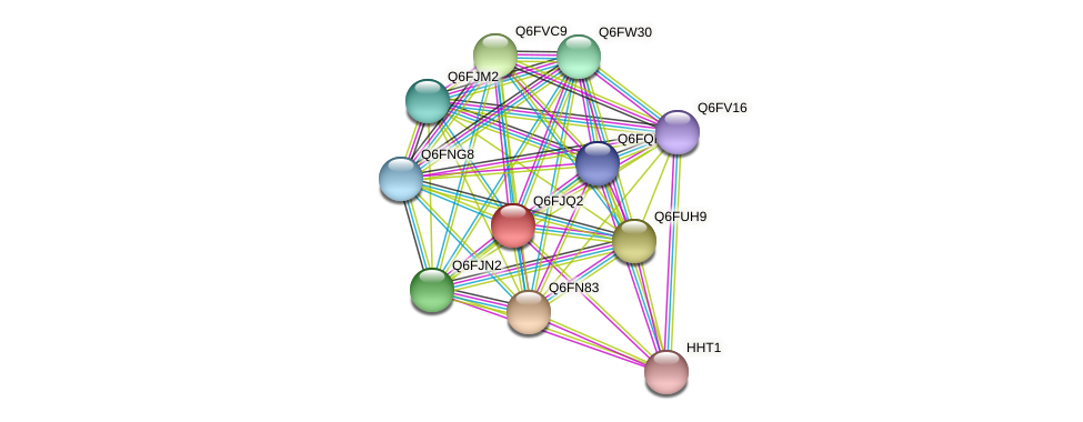 XP_449542.1 protein (Candida glabrata) - STRING interaction network