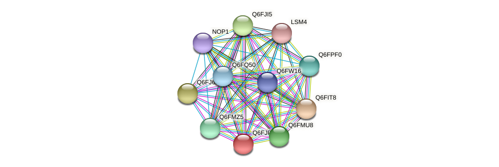 XP_449547.1 protein (Candida glabrata) - STRING interaction network