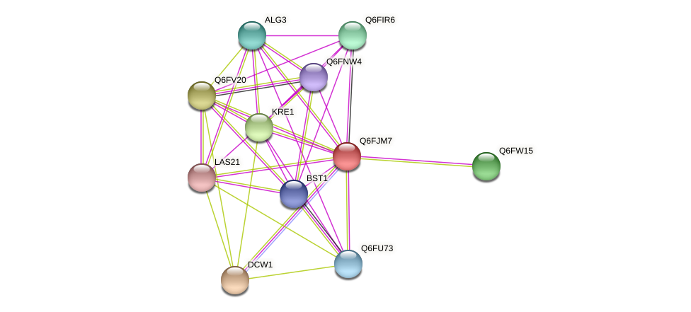 XP_449567.1 protein (Candida glabrata) - STRING interaction network
