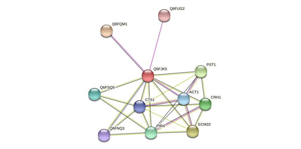 XP_449589.1 protein (Candida glabrata) - STRING interaction network