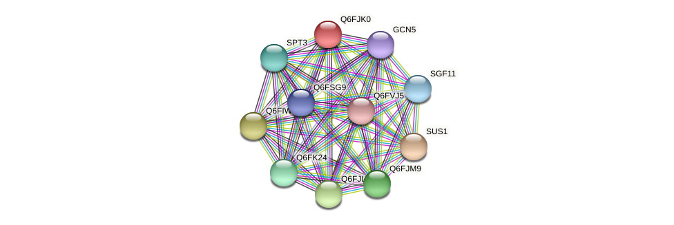 XP_449594.1 protein (Candida glabrata) - STRING interaction network