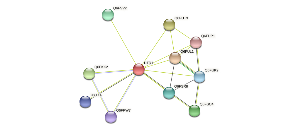 XP_449620.1 protein (Candida glabrata) - STRING interaction network