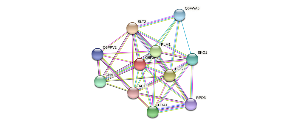 XP_449622.1 protein (Candida glabrata) - STRING interaction network