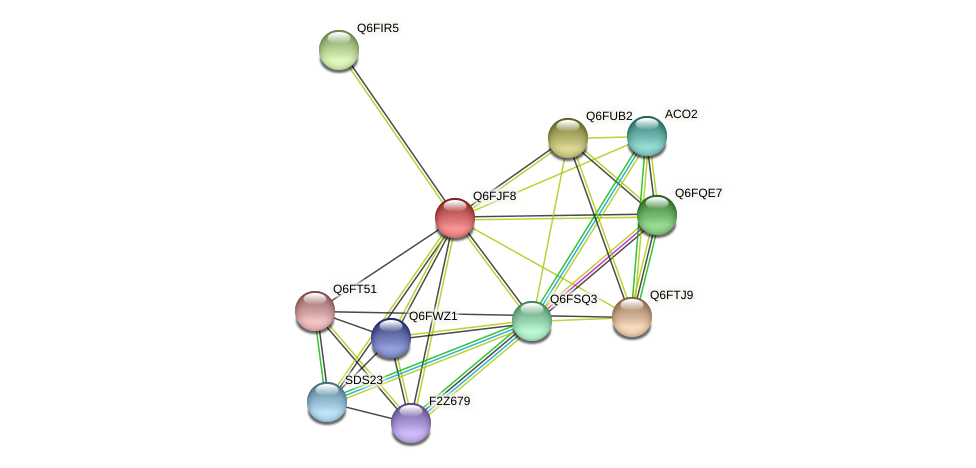 XP_449636.1 protein (Candida glabrata) - STRING interaction network