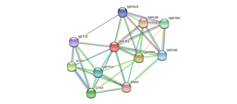 XP_449640.1 protein (Candida glabrata) - STRING interaction network