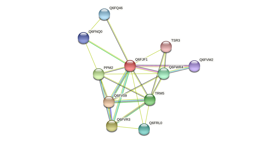 XP_449643.1 protein (Candida glabrata) - STRING interaction network