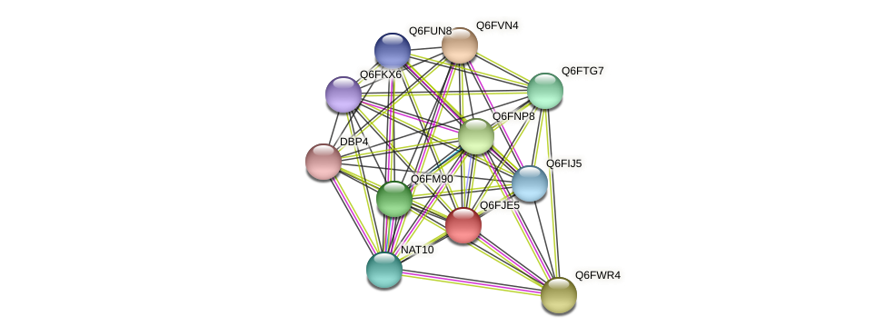 XP_449649.1 protein (Candida glabrata) - STRING interaction network