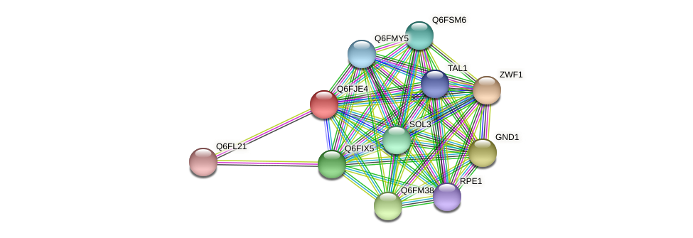 XP_449650.1 protein (Candida glabrata) - STRING interaction network