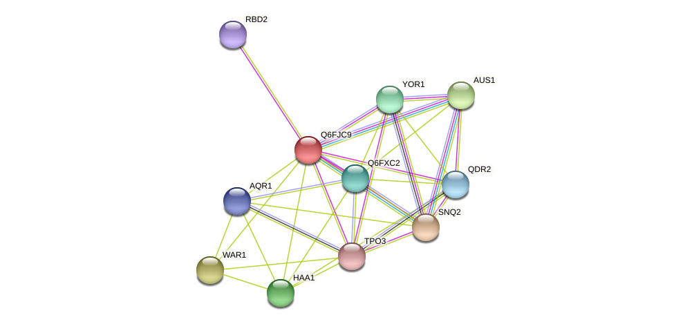 XP_449665.1 protein (Candida glabrata) - STRING interaction network