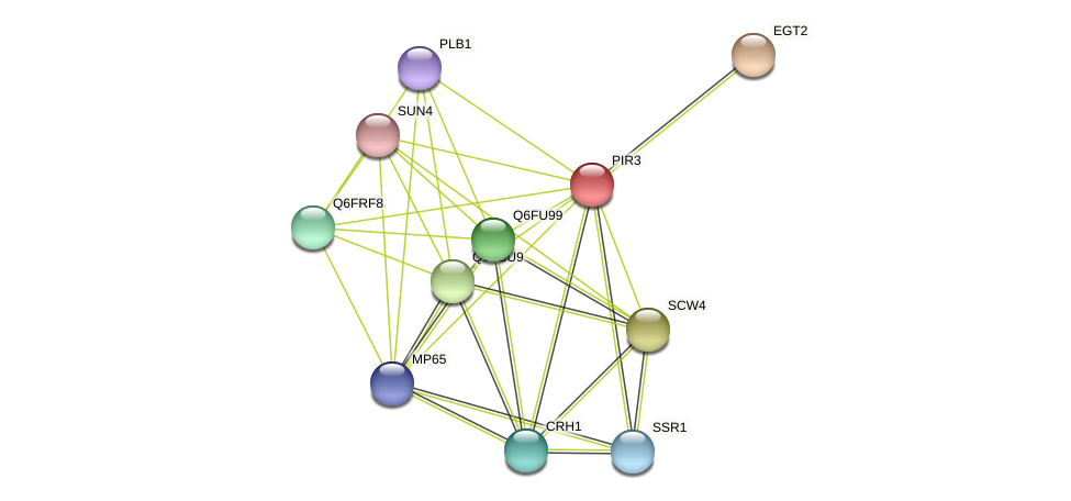PIR3 protein (Candida glabrata) - STRING interaction network