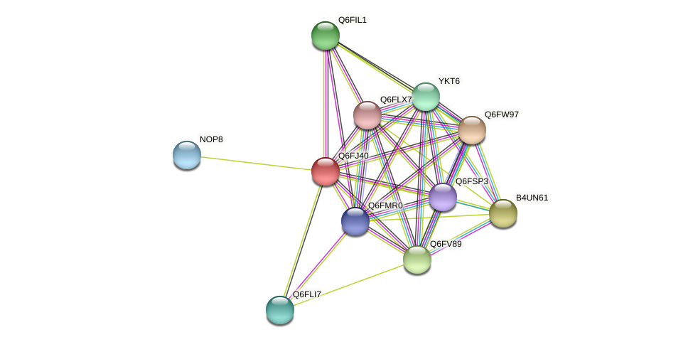 XP_449754.1 protein (Candida glabrata) - STRING interaction network