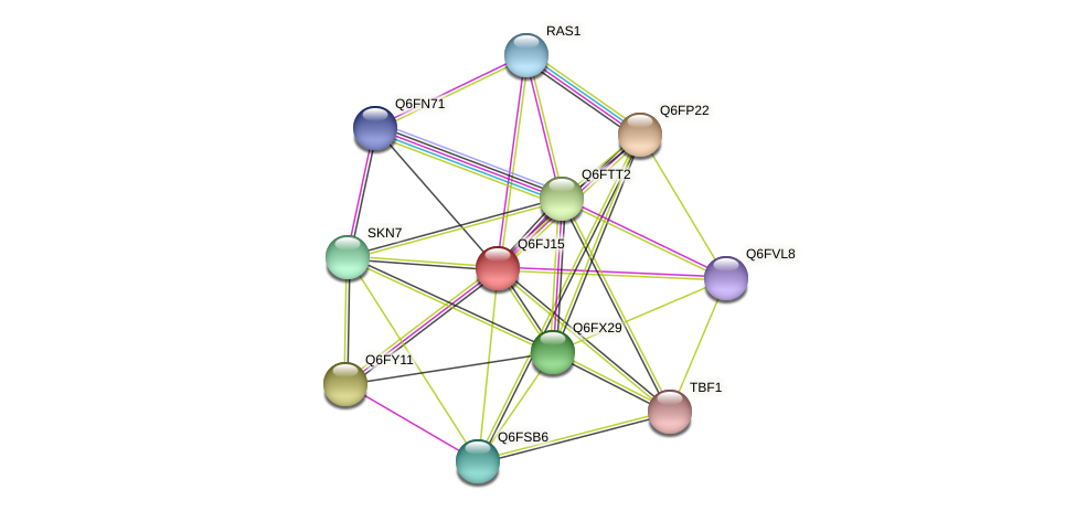 XP_449779.1 protein (Candida glabrata) - STRING interaction network