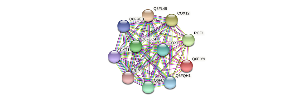 XP_449805.1 protein (Candida glabrata) - STRING interaction network