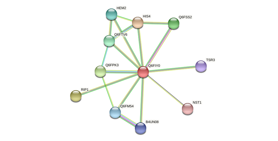 XP_449814.1 protein (Candida glabrata) - STRING interaction network