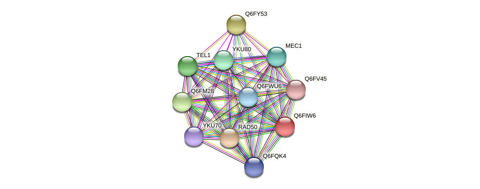 XP_449828.1 protein (Candida glabrata) - STRING interaction network