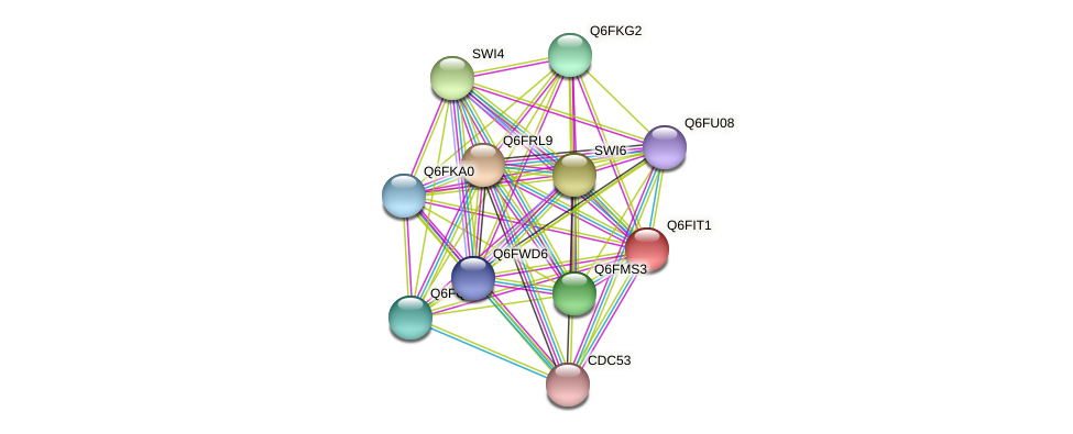 XP_449863.1 protein (Candida glabrata) - STRING interaction network