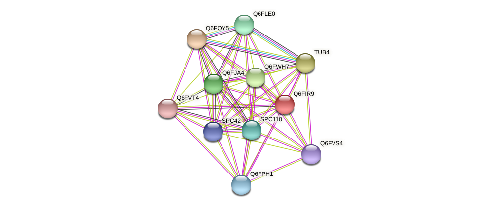 XP_449875.1 protein (Candida glabrata) - STRING interaction network
