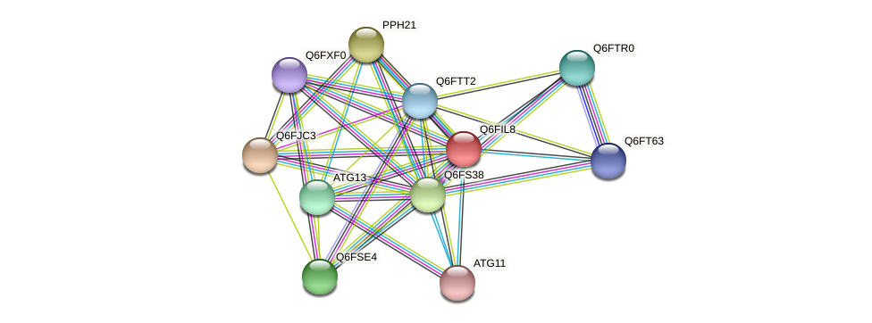 XP_449926.1 protein (Candida glabrata) - STRING interaction network