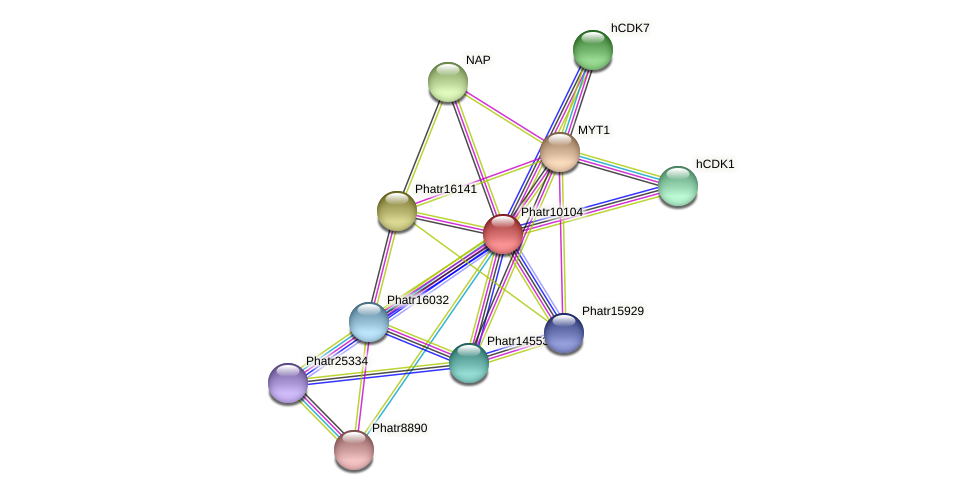 Phatr10104 protein (Phaeodactylum tricornutum) - STRING interaction network