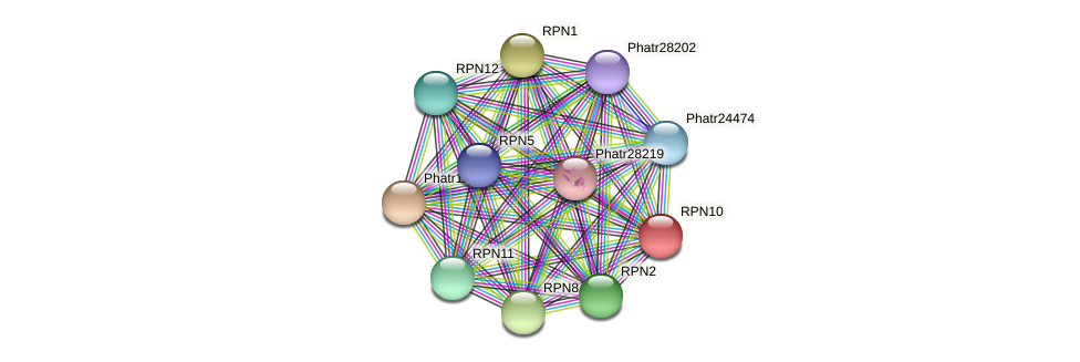 RPN10 protein (Phaeodactylum tricornutum) - STRING interaction network