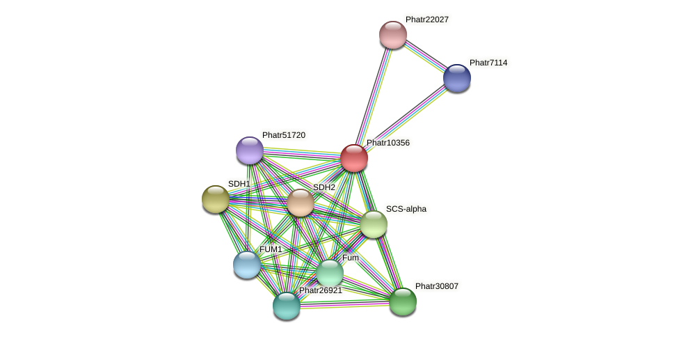 Phatr10356 protein (Phaeodactylum tricornutum) - STRING interaction network