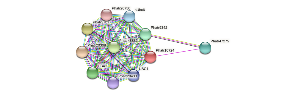 Phatr10724 protein (Phaeodactylum tricornutum) - STRING interaction network